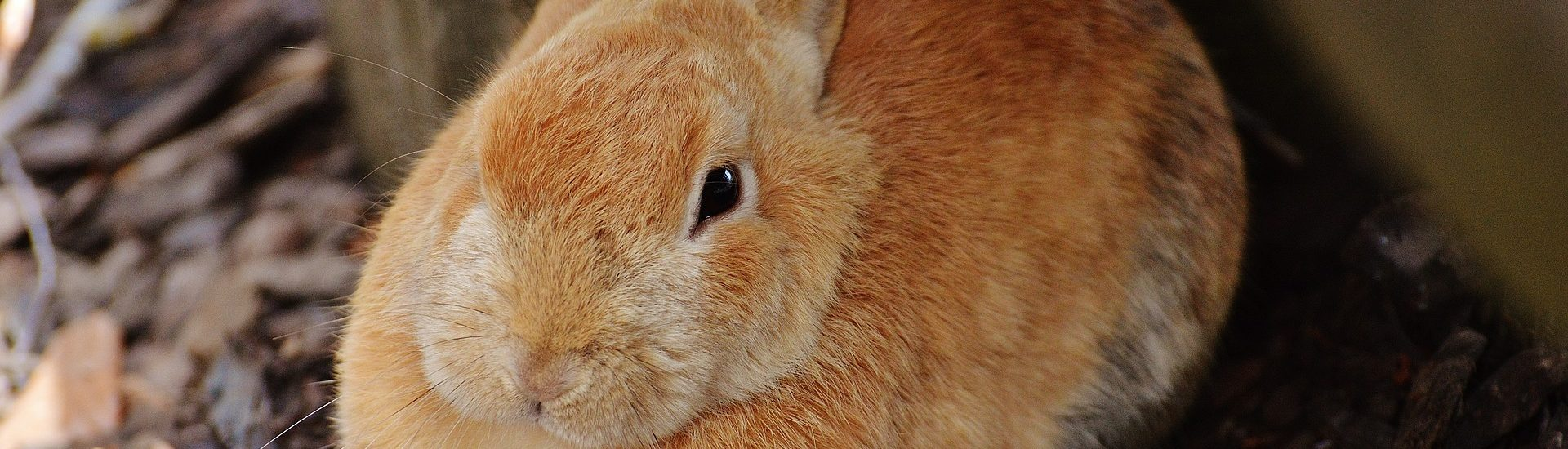 Introducing Rabbits - RSPCA South Bedfordshire Branch